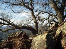 Mountain Trees, Original Photo by Victoria Reno 16x20