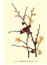 Set of 12 Vintage MARY WALCOTT Botanical Wildflower Art Prints