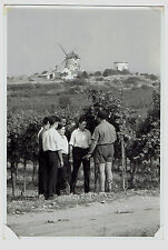 Photo Windmühle MOLEN moulin Młyn 1950s Austria Retz (1838)