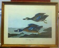 Vintage Blue Winged Teal Print John J. Audubon Penn Prints NY P1227 Anas Discors