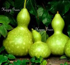 Bottle Gourd - Squash - 10 SEEDS - Cucurbita Pepo - Birdhouse