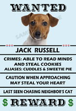 Jack Russell Terrier Wanted Poster Flex Fridge Magnet 2.75 X4 See Video