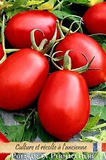 Tomate « De Berao » 20 graines méthode Bio (seed tomato permaculture)