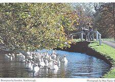 Yorkshire Postcard - Brompton-by-Sawdon - Scarborough - Showing Swans   SM207