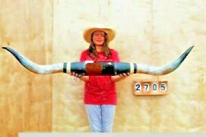 "STEER LONG HORNS MOUNTED 5' 6"" COW BULL SKULL TAXIDERMY LONGHORN LH2705"