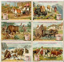 Chromo Liebig Sang. 503 FRA Razze Bovine ANNO 1897