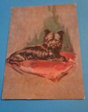 Vintage Dog Postcard. Gray Skye Terrier on pink cushion.