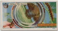 Caterpilllar Foot Structure Magnified 30 X 1920s Trade Ad Card