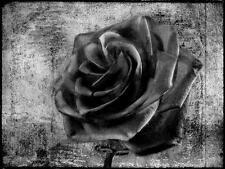 Impresión A5 – Rosa Gótico Negro Carbón (Imagen Cartel Art Flor Margarita Bluebell)