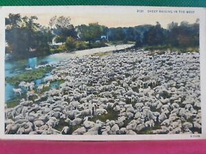 Vtg PC Sheep Raising in the West NP