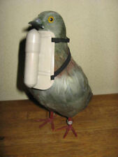 WWII Swiss Army Pigeon Message Messenger Belly Capsule NOS RARE