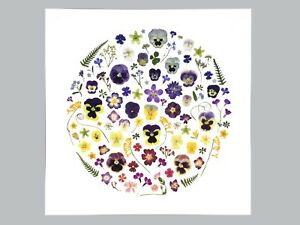 Pressed Flower Art Print 30.5 x 30.5cm with Lucky clover, pansies, forget me not