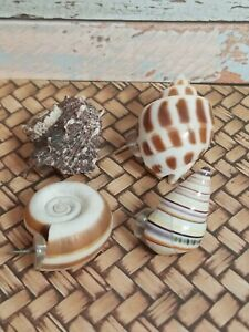 4 Pc Lot!! Sea Shell Push Pin Beach Sand Thumb Tacks For A Cork Board Or Wall