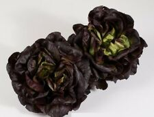 Salanova Gaugin Multileif Salad 15 Seeds Holland Саланова Мультилиф Гоген