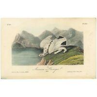 Audubon Octavo 1st Ed 1840 hand-colored lithograph Pl 300 American Ptarmigan