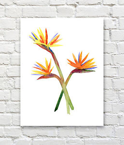 Bird of Paradise Art Print Watercolor Floral Painting by Artist DJR