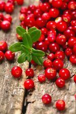 20Pcs Rare Red Cranberry Fresh Seeds Healthy Fruits Perennial Summer Home Garden
