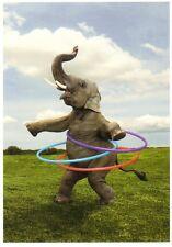 Ansichtskarte: Rhythmus im Blut  - Elefant mit Hulahoop-Reifen- dancing elephant