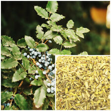 Oregon Grape Root, organic, soap making supplies herbal extracts.