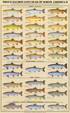 Trout, Salmon & Char of North America II Animal Art Poster Print, 23x37