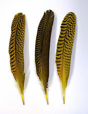 """3 Pcs PEACOCK QUILLS 10""""-14"""" Dyed YELLOW Feathers; Costume/Bridal/Halloween"""