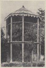 D9835 La Palma di Goethe nell'Orto Botanico di Padova - 1921 Stampa d'epoca