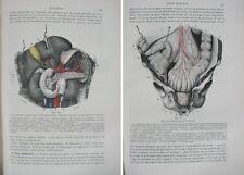 Traité d'Anatomie HUMAINE – Tome 3 / Léo Testut / Doin éditeur en 1895
