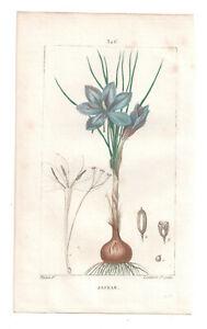 1814-18 Hand Coloured print Saffron, Chaumeton-Turpin, Flore Medicale