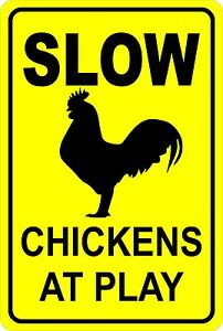 "SLOW Chickens at Play  Funny  Aluminum  8"" x 12"" Sign"
