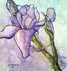 WILD IRIS Forest Flower Artist Signed Print Lynne French 8x11