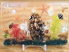 Novelty Home Decor Ocean Sea Shells Beach Art Ornament Paperweight Nautical ss66