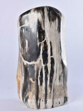 More details for petrified wood, polished fossil wood tower, indonesia 160mm