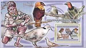(223770) Birds, Scouting, Owl, Guinea