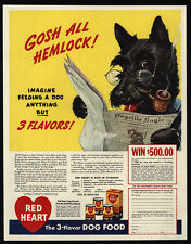 1941 SCOTTISH TERRIER - Scotty Dog Reads Newspaper - RED HEART Food VINTAGE AD