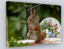 STUNNING RED SQUIRREL CANVAS PICTURE PRINT WALL ART CHUNKY FRAME LARGE 2252-2