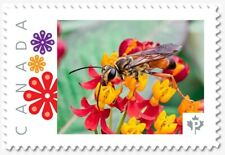 uq. WASP = Bug = Insects = bee = Picture Postage MNH-VF Canada 2019 [p19-01s18]