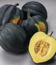Heirloom ACORN SQUASH Table King Bush❋50 SEEDS❋Large Winter Squash❋Long Keeper
