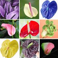 100 Pcs Seeds Flowers Anthurium Bonsai Balcony Potted Plants Garden NEW 2019 T M