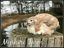 50+ German Pastel Collection Coturnix Hatching Eggs By Myshire! Multiple Colors!