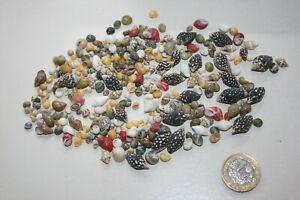 Colourful small seashell selection