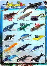 DeAgostini Whales & Co. Maxxi Edition  komplett alle 16 Wale