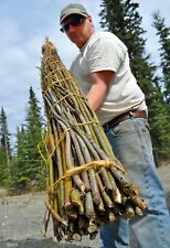 Willow Cuttings - 180cm (6ft) x 50 - Fast Growing Hybrid - up to 240cm (8') pa