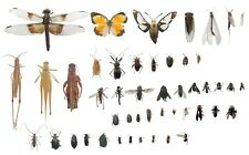 Pinned Usa Insect Specimens for Entomology Class Dead Bug Collection Identified!
