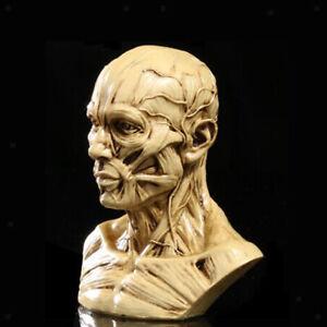 4'' Statua Busto In Resina Uomo Muscolo Anatomia Decorativo Statuette Casa