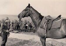 WW2 Photo WWII German Soldier with Horse   World War Two Wehrmacht / 2474