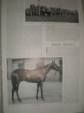 Printed photo British thoroughbred race horse Rock Sand 1903 ref Y3
