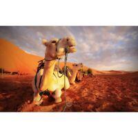 Full 5D DIY Art Craft Embroidery Camel Resting Kits Art Embroidery Souvenir New