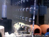 11'x11.5'Aquarium Acrylic Divider With Holes 4 Suction Cup Fish Guppies