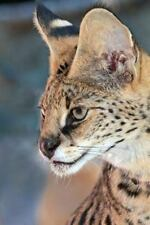 African Serval Cat Journal : 150 Page Lined Notebook/diary by Cool Image...