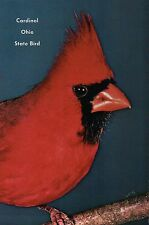 Red Cardinal, State Bird of Ohio, North America, Branch, OH --- Animal Postcard